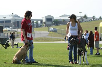 What To Consider When Choosing A Dog Training School