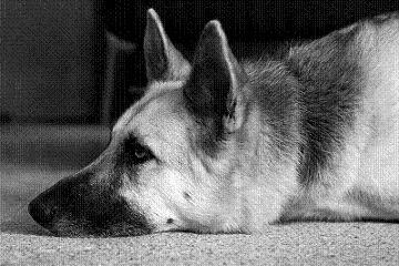 Dog Whisperer Training Methods