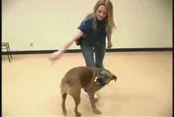 Teaching Dog Tricks: The Spin Dog Trick