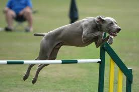 Curious about Dog Agility Training?