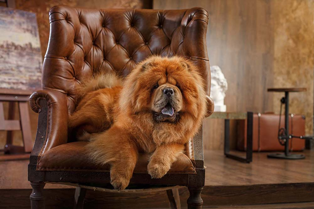 Dog Grooming: What to Do and How to Do It!