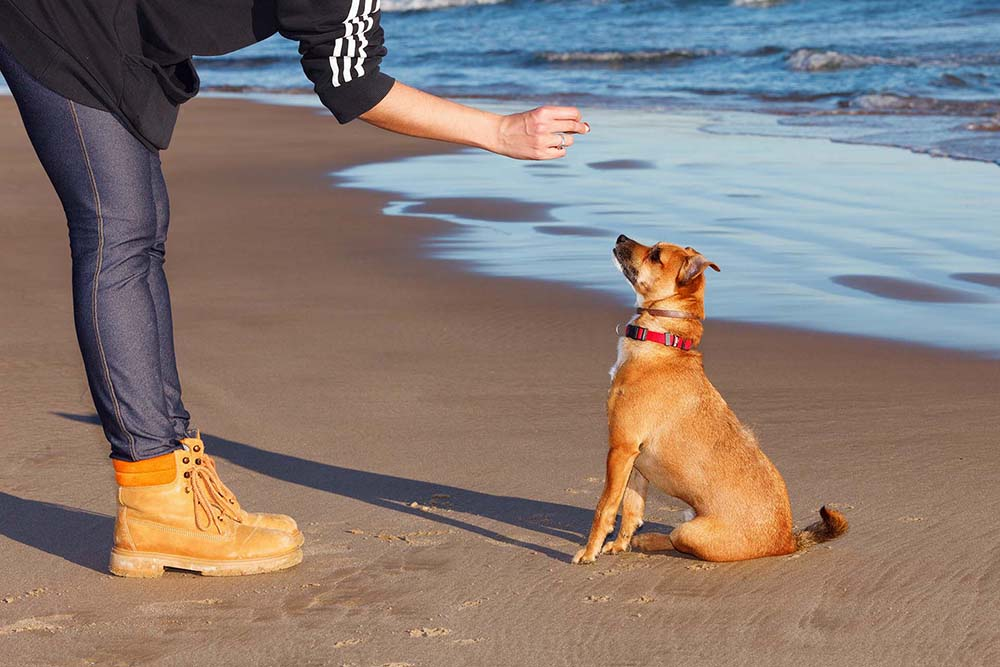 Dog Training Tips: More Information than You Can Shake a Target Stick At!