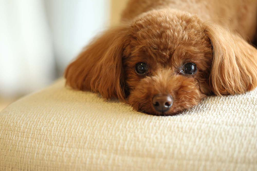 How to Stop Puppy Whining Habits