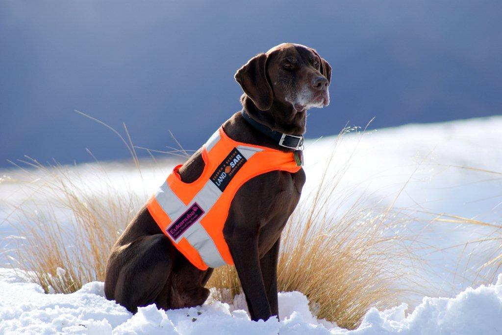 How to Train a Search Dog