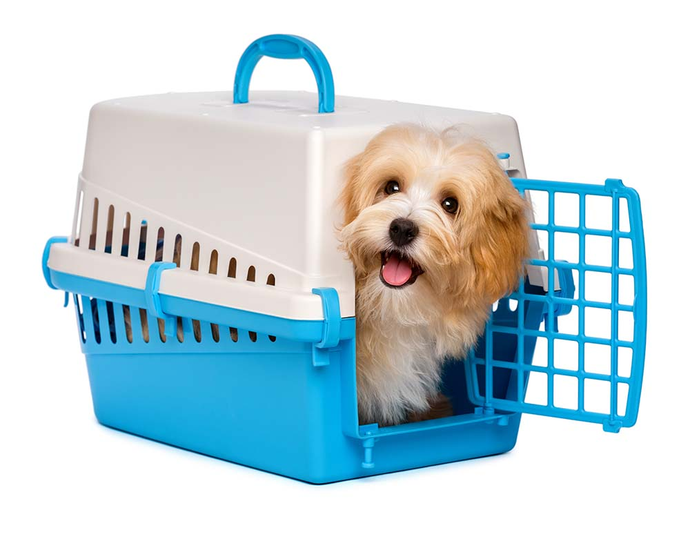 Puppy Crate Training - The Safe, Humane, and Effective Way - Eat ...