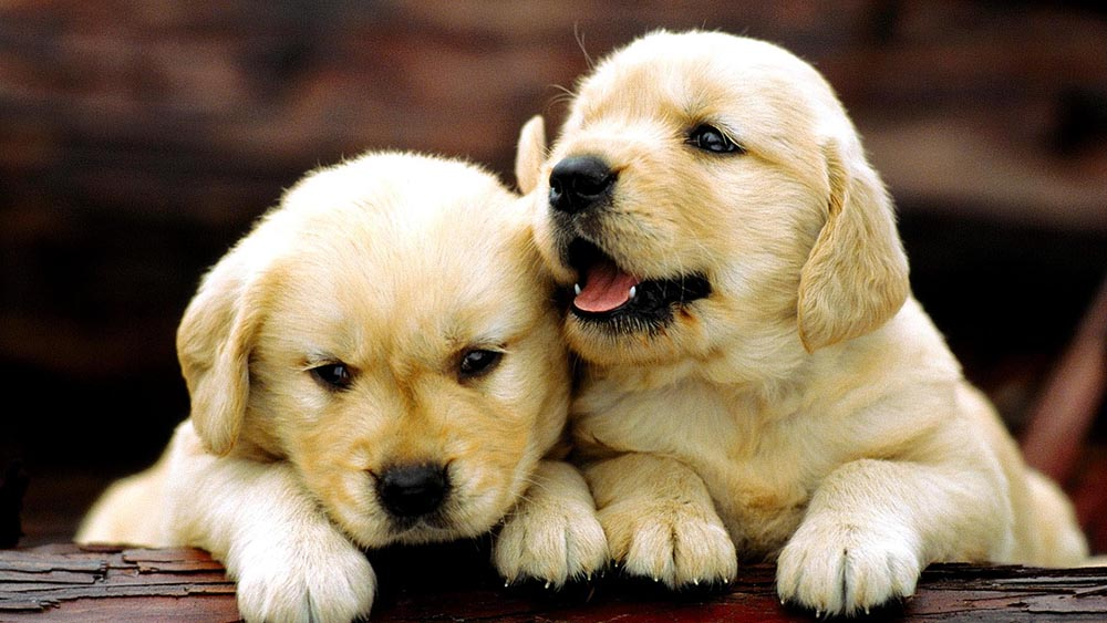 Puppy Housebreaking Solutions To Potty Training