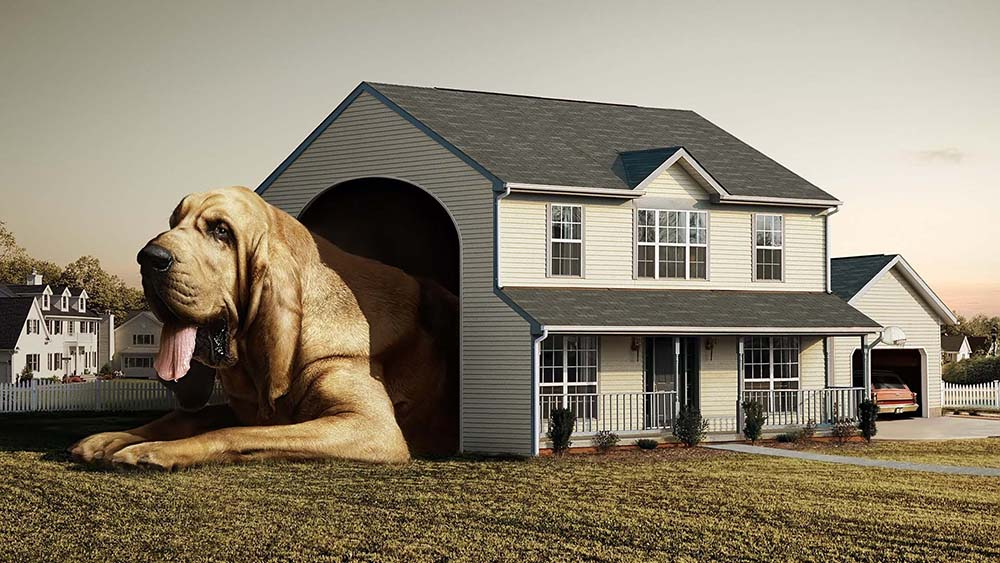 Puppy-Proofing Your House or Apartment