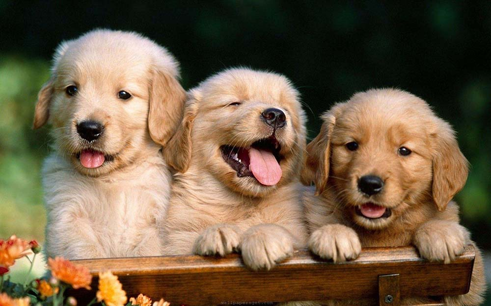Socialization Training for Puppies