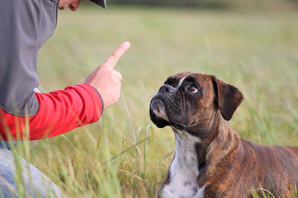 Training A Dog To Stay