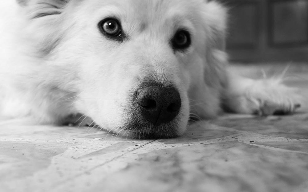 Understanding Arthritis In Dogs