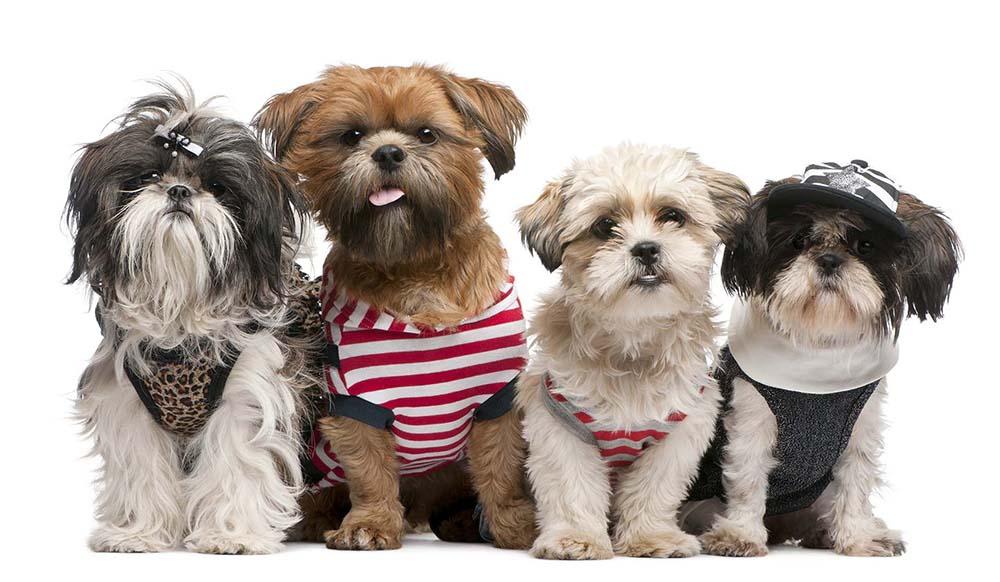 Choosing A Dog Breed