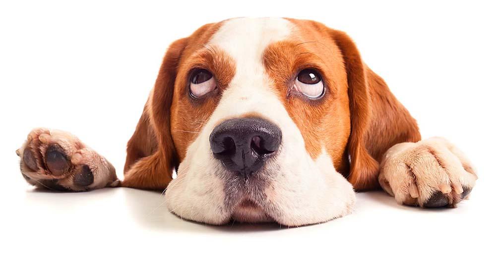 Puppy & Dog Behavior Training - Proven Techniques To Help Solve Problem Behaviors