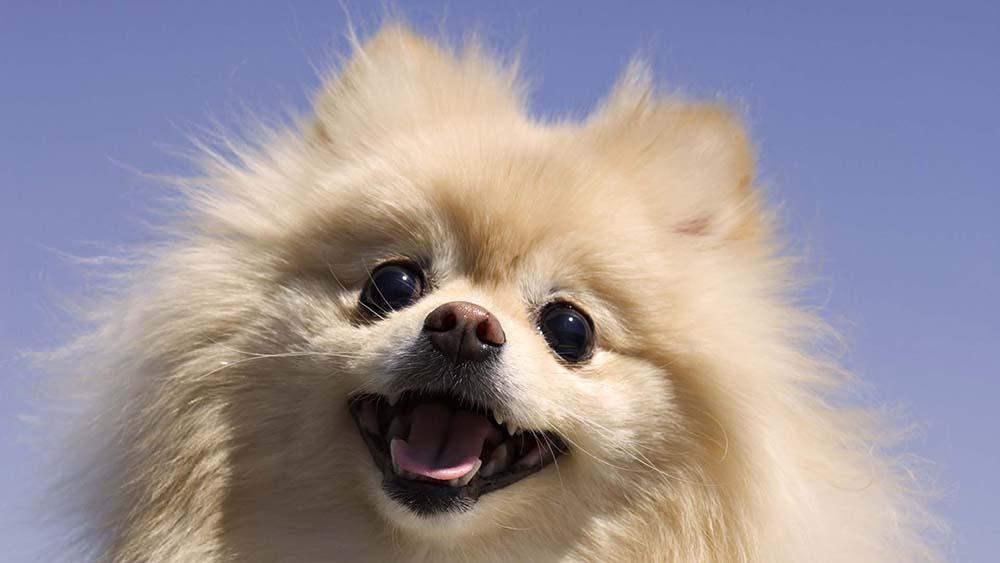 smiley-dog