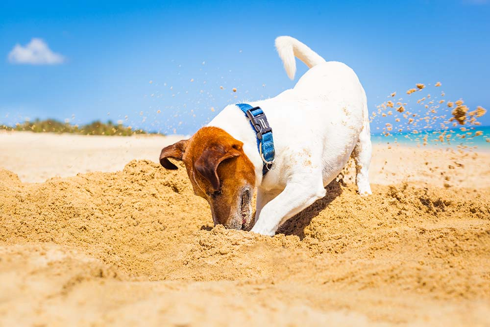 How to Stop Dogs from Digging
